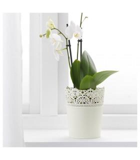 گلدان کوچک ایکیا مدل SKURAR